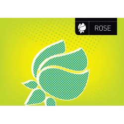 Rose - Asian Paints Wall Fashion Stencil